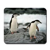 Chinstrap Penguin Mousepad