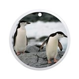Chinstrap Penguin Keepsake (Round) Ornament