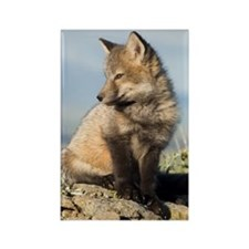 Cross Fox Kit Rectangle Magnet (10 pack)