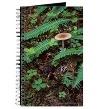 Personal Journal & Sketchbook: Mushroom and Ferns