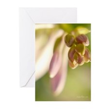 Cluster of Promises Greeting Cards (Pk of 20)