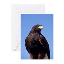 Greeting Cards: Harris's Hawk (Pk of 10)