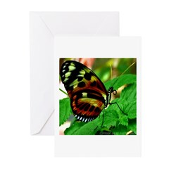 Heliconius Photo by J.W. Mack Greeting Cards (Pk o
