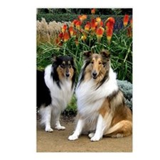 Postcards (Package of 8) Tricolour & Sable