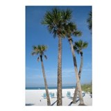 Beach Palms Postcards (Package of 8)