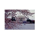 Cherry Blossoms, Washington, DC Rectangle Magnet
