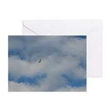 Gull Greeting Cards (Pk of 20)
