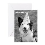 Border Collie, Got Cake? Greeting Card