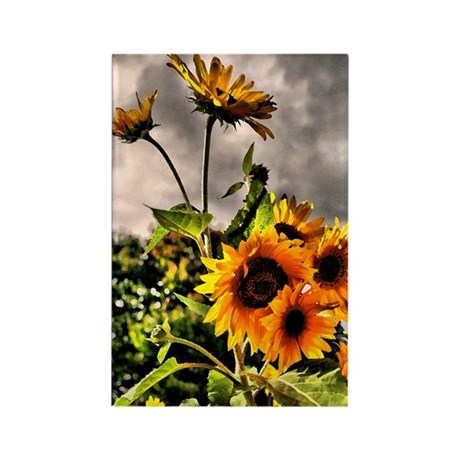 Sunflower Dream Rectangle Magnet