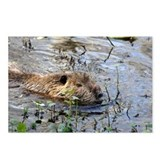 LOUISIANA NUTRIA - Postcards (Package of 8)