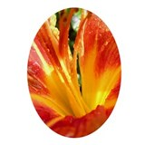 Orange Daylily - Keepsake (Oval)