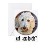 got labradoodle? Greeting Cards (Pk of 10)