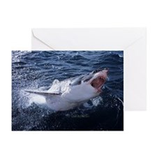Attacking Shark Greeting Cards (Pk of 10)