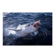 Attacking Shark Postcards (Package of 8)