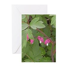 Bleeding Hearts Flower Greeting Cards (Pk of 10)