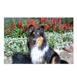 Summer Flower Sheltie Postcards (Package of 8)