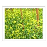 napa valley springtime mustard small posters