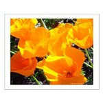 burst of calfornia poppies small poster print