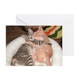 Valentine\'s day and cats Greeting Cards