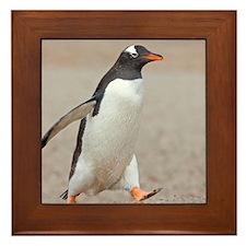 Unique Falklands penguin Framed Tile