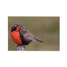Funny Meadowlark Rectangle Magnet