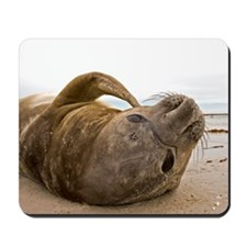 Funny Falkland islands Mousepad