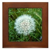 Dandelion Seed Head Framed Tile