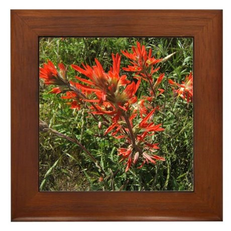 Indian Paintbrush Flower Framed Tile