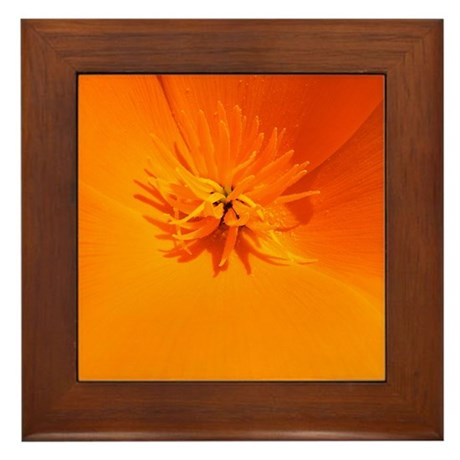 California Poppy Framed Tile