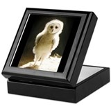 Cute Owl Keepsake Box