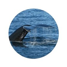"Whale Tail - 3.5"" Button (100 pack)"
