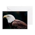 Bald Eagle Photo Greeting Cards (Pk of 20)