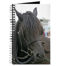 Black Percheron Horse Journal