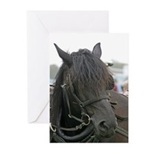 Black Percheron Horse Greeting Cards (Pk of 20)