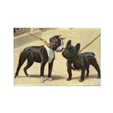 Boston Terrier and French Bulldog Rectangle Magnet