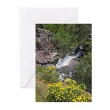California Wildflower Cards (Pk of 10)