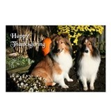 Sheltie Friends Postcards (Package of 8)