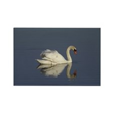 Swan Rectangle Magnet