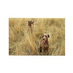 The Great Dane Rectangle Magnet (100 pack)