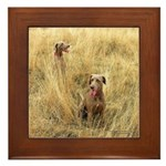 The Great Dane Framed Tile