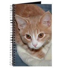 ORANGE TABBY Journal