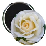 "White Rose 2.25"" Magnet (100 pack)"