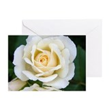 White Rose Greeting Cards (Pk of 20)
