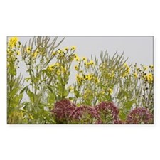 WILDFLOWER Rectangle Decal