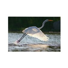 EGRET in SUNLIGHT Rectangle Magnet (10 pack)