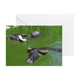 Water Buffalo Greeting Cards (Pk of 10)