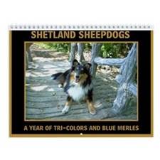 Tri and Blue Merle Sheltie Wall Calendar