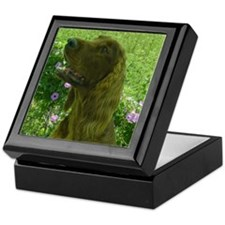 Rock the Irish Setter Keepsake Box