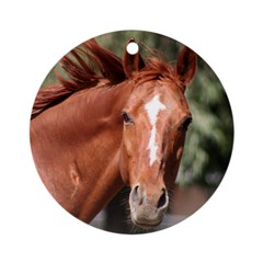 Red Chestnut Horse