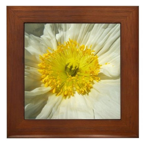 White Icelandic Poppy Framed Tile